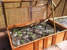 cold frame and drip irrigation