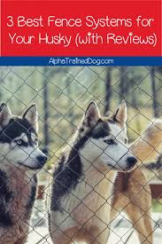 Top 3 Best Dog Fences For Huskies With Full Reviews Alpha Trained Dog