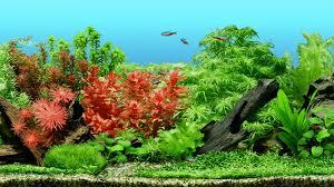 10 best aquarium plant fertilizer