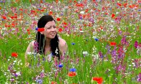 wildflower meadow or patch