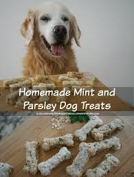 homemade mint and parsley dog treats