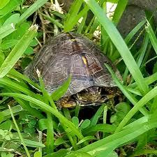 Gopher Tortoise Ask The Expert 2019
