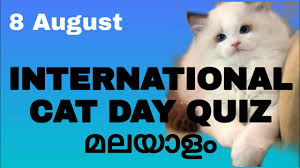 international cat day 8 August 2020 ...