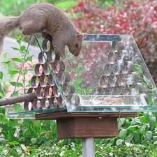 prevent squirrels from reaching birdseed