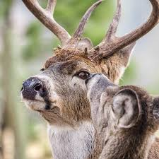 It S Time To Cut The B S In Deer Hunting Outdoor Life