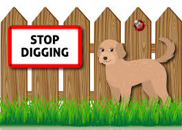 How To Stop A Dog From Digging Under The Fence Cockapoo Corner