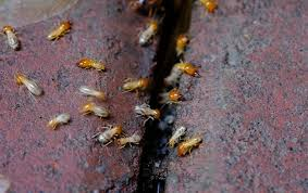 View Termites R Us  Background