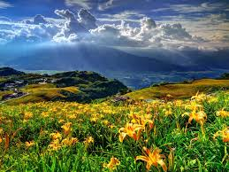 mountains hills lillies yellow flower