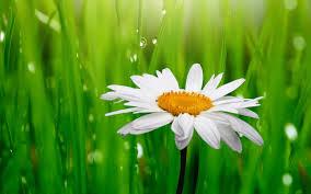 20 خلفية زهور رائعة عالية الدقة مجانا Green Grass Background