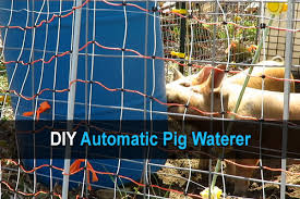 diy automatic pig waterer homestead