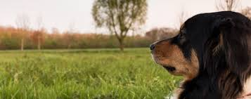 The Pros And Cons Of Electric Fences For Dogs Prudent Pet Insurance