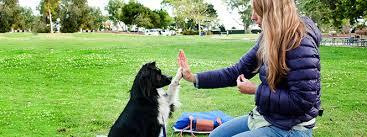 Como Adestrar Um Cachorro: O Guia Definitivo