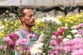 بوابة فيتو في أكبر مزارع الورد بالقناطر الخيرية الجو عندنا