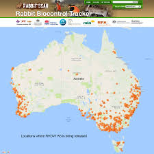 Rabbit Biocontrol Rhdv1 K5 National Release Agriculture And Food