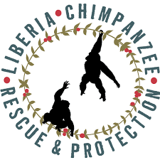 Image result for liberia chimpanzee