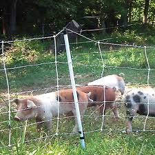 Pig Quikfence 6 30 12 Electric Netting Premier1supplies