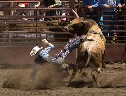 Rodeo Bull Rider Wall Decal Wallmonkeys Com