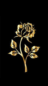 golden rose wallpapers top free
