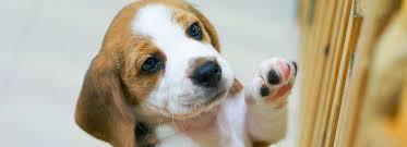 Dog Gates Pens For Indoors Or Out Petsmart