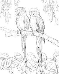 Twee Rode Macaw Papegaaien Kleurplaat Gratis Kleurplaten Printen