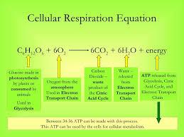 photosynthesis respiration equation