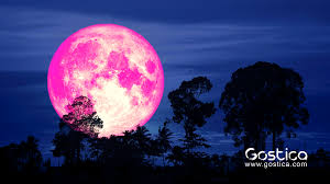 The Pink Moon 2019 And Its Emotional ...