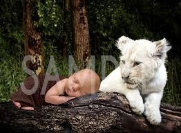 white tiger cub newborn backdrop