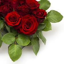 bright roses 04 hd picture free stock