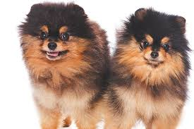 small dogs 7 things to know about