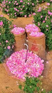 أجمل مناظر الطبيعة وأجمل الورود Home Facebook
