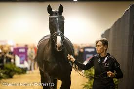 All Horses Pass Veterinary Inspection For Omaha World Cup - PS Dressage