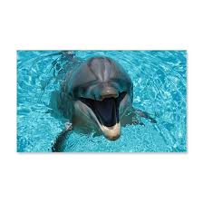 Smiling Dolphin Wall Decal By Wickeddesigns1 Cafepress