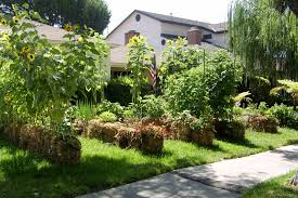 front lawn into a vegetable garden