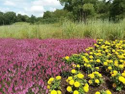 flowers review of lauritzen gardens