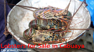 Things to Buy: Lobsters for Sale in Cabuaya