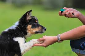 How to Clicker Train Your Dog: An ...