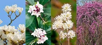 shrubs for a year round scented garden