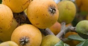5 فوائد صحية من تناول فاكهة الأكيدنيا - المرأة
