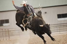 bull riding backgrounds free