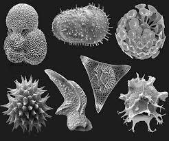Que son los microfósiles? – La Lupa