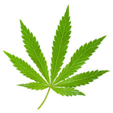 Marijuana   Center for Young Women's Health