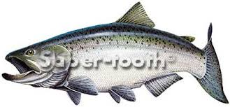 Vinyl Freshwater Fish Stickers Chinook Salmon Large L The Fly Shack Fly Fishing