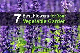 flowers for your vegetable garden