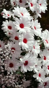 صور ورد أزهار الربيع ورود طبيعيه صور ورد جميله موجه بحر