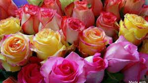 ازهار وورود طبيعية