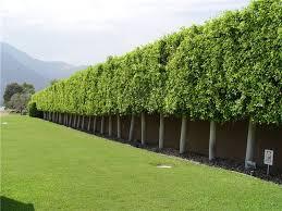 Landscape Wind Breaks Landscaping Network