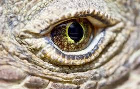 reptile scales komodo dragon