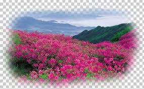 flower garden landscape desktop png