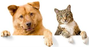 Image shows dog and cat