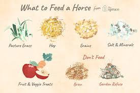 mon feeds for horses
